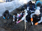 H281217親子農業体験サツマイモ掘り・いやし収穫体験 (32)