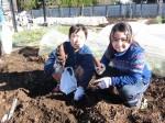 H281217親子農業体験サツマイモ掘り・いやし収穫体験 (49)