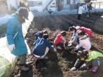 H281217親子農業体験サツマイモ掘り・いやし収穫体験 (52)