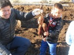 H281217親子農業体験サツマイモ掘り・いやし収穫体験 (56)