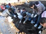 H281217親子農業体験サツマイモ掘り・いやし収穫体験 (59)