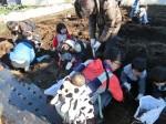 H281217親子農業体験サツマイモ掘り・いやし収穫体験 (60)