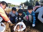 H281217親子農業体験サツマイモ掘り・いやし収穫体験 (65)