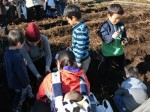 H281217親子農業体験サツマイモ掘り・いやし収穫体験 (77)