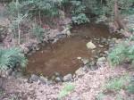 南沢湧水池