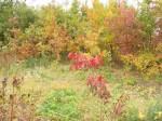 水辺公園紅葉IMG_ (2)