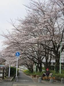 黒目川~神山大橋-1