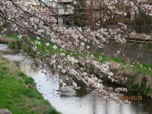 黒目川~神山大橋-2