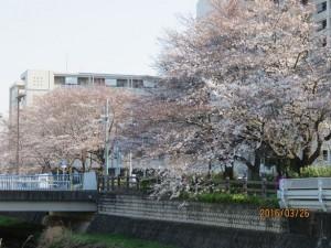 黒目川~神山大橋-3